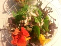insalata aromatica