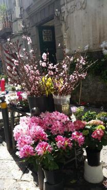 fiori 2