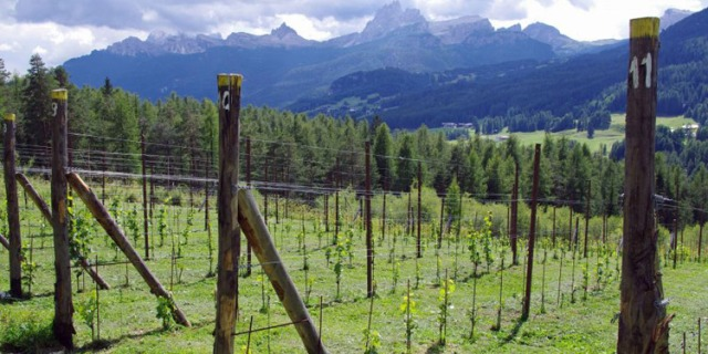 VInoVip-2015-location-Vigna-di-Cortina